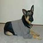 Dog Sweatshirt Pattern