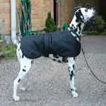 Dalmation Quick Coat